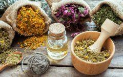 O Que é Fitoterapia – A Cura Pela Plantas